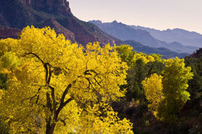 Zion Canyon In Fall
